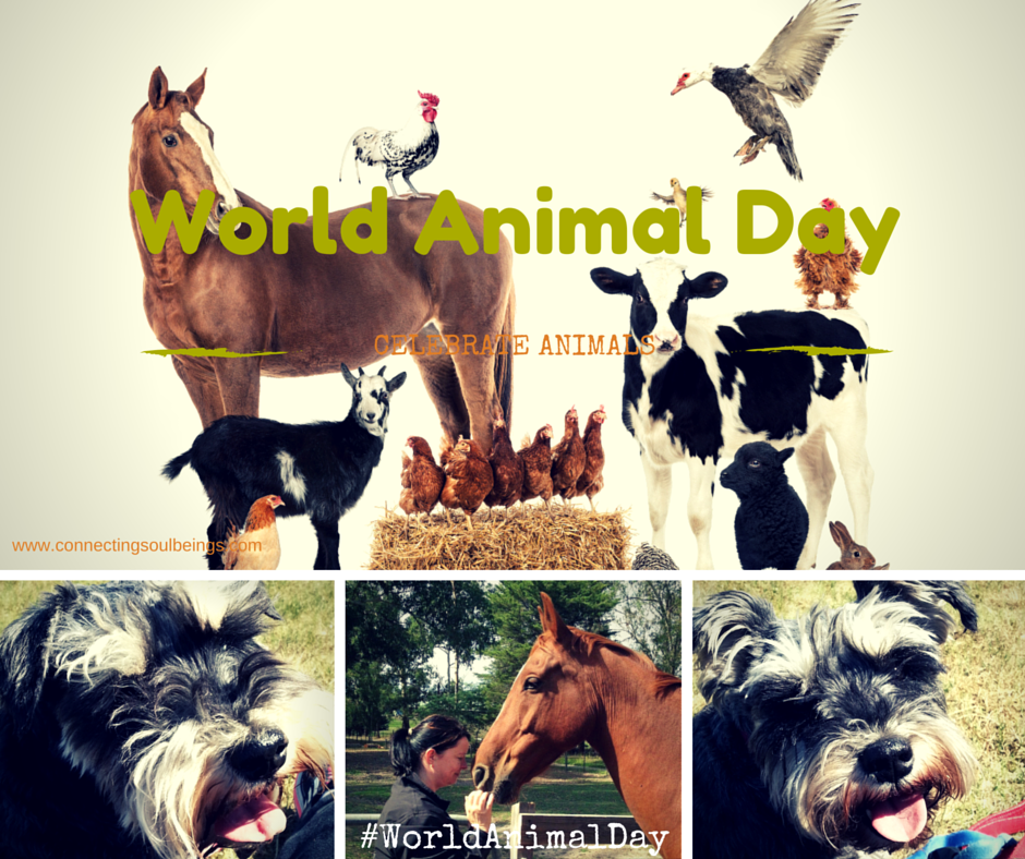 Today is World Animal Day…