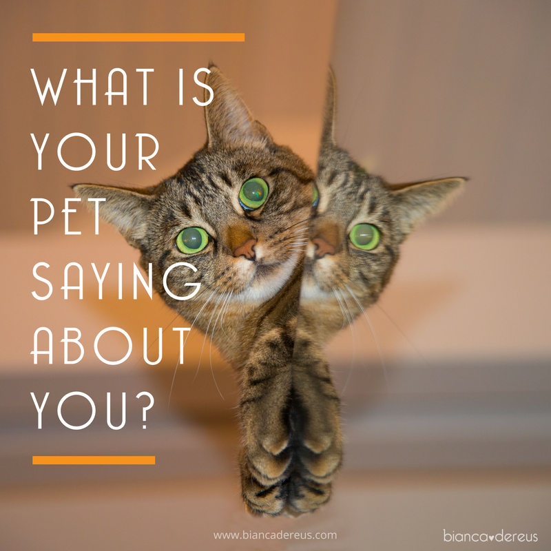 Your Pet is Your Mirror
