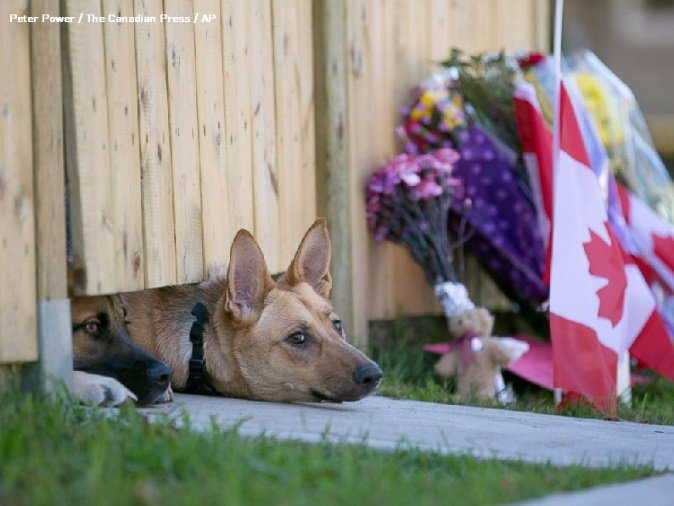 Animals also experience sadness and grief; your job is to help them through