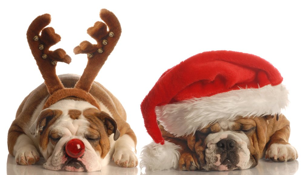 How to help animals enjoy your family festivities